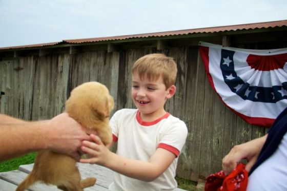 Gid's Puppy 1803