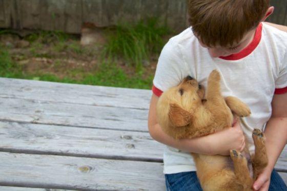 Gid's Puppy 1806