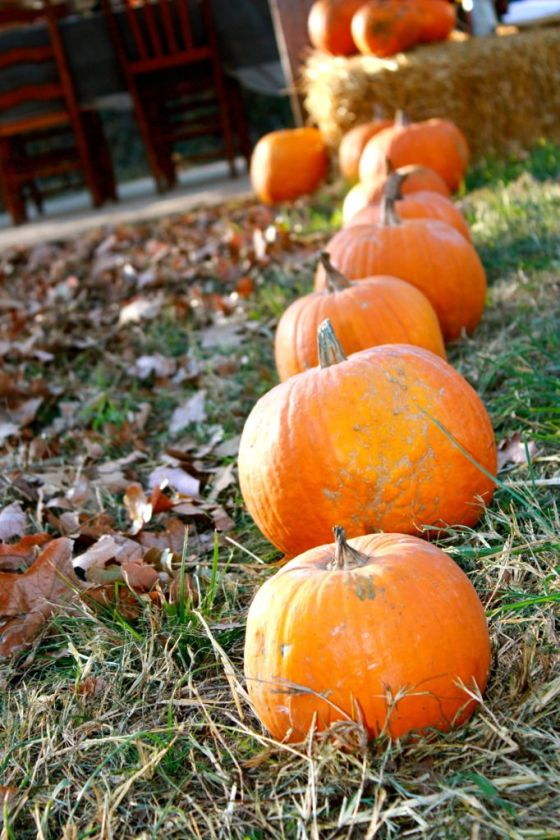 I lined the pathway with pumpkins we borrowed from a nearby farm and filled in the path with crunchy leaves. Very fun!